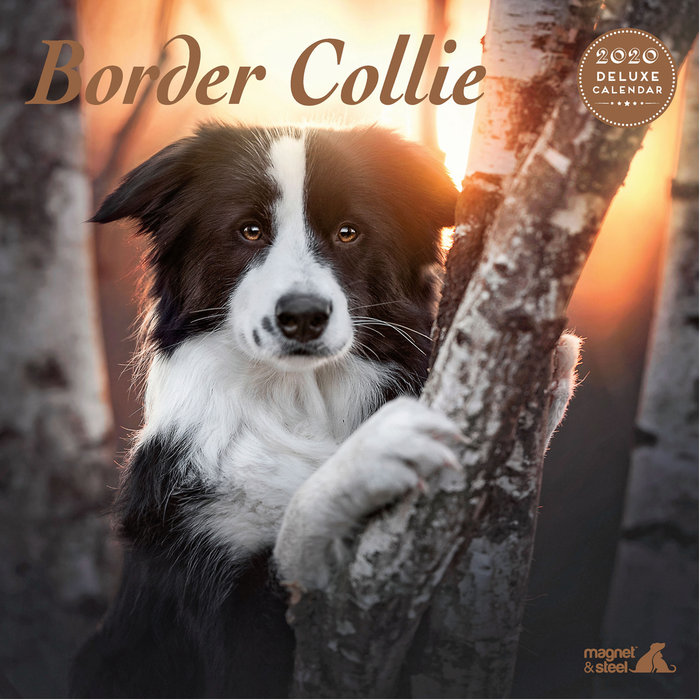 Calendario Border Collie Deluxe